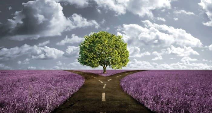 Дърво и небе