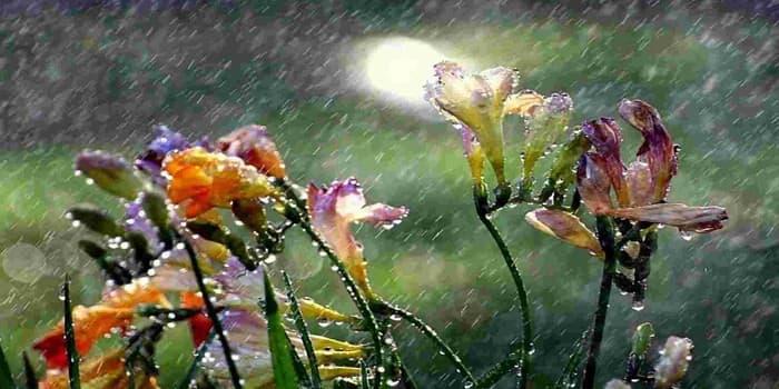 Цветя в дъжда