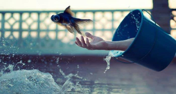 Магията води до изкуствена дисхармония